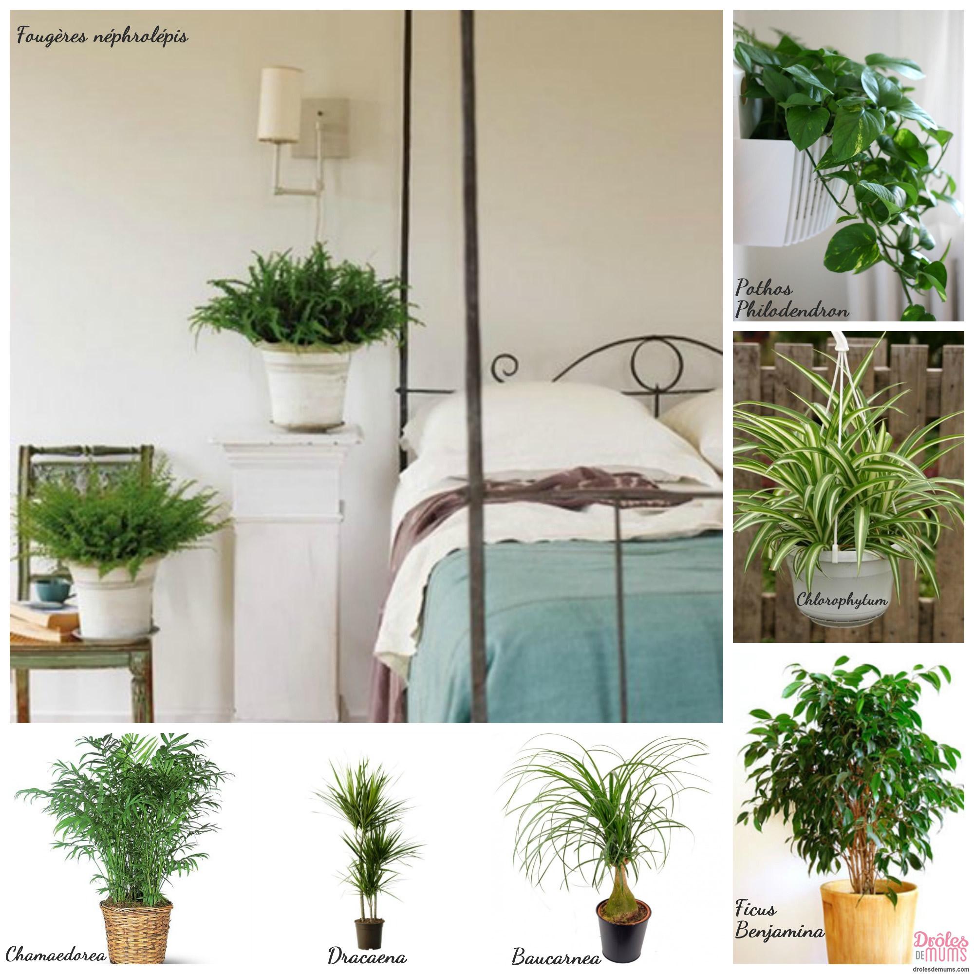 plantes d 39; intérieur non toxiques pour bébé