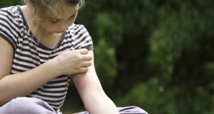 demangeaisons-moustiques